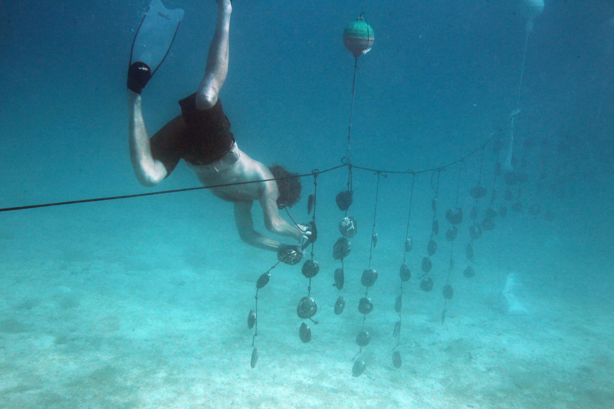 Bates underwater