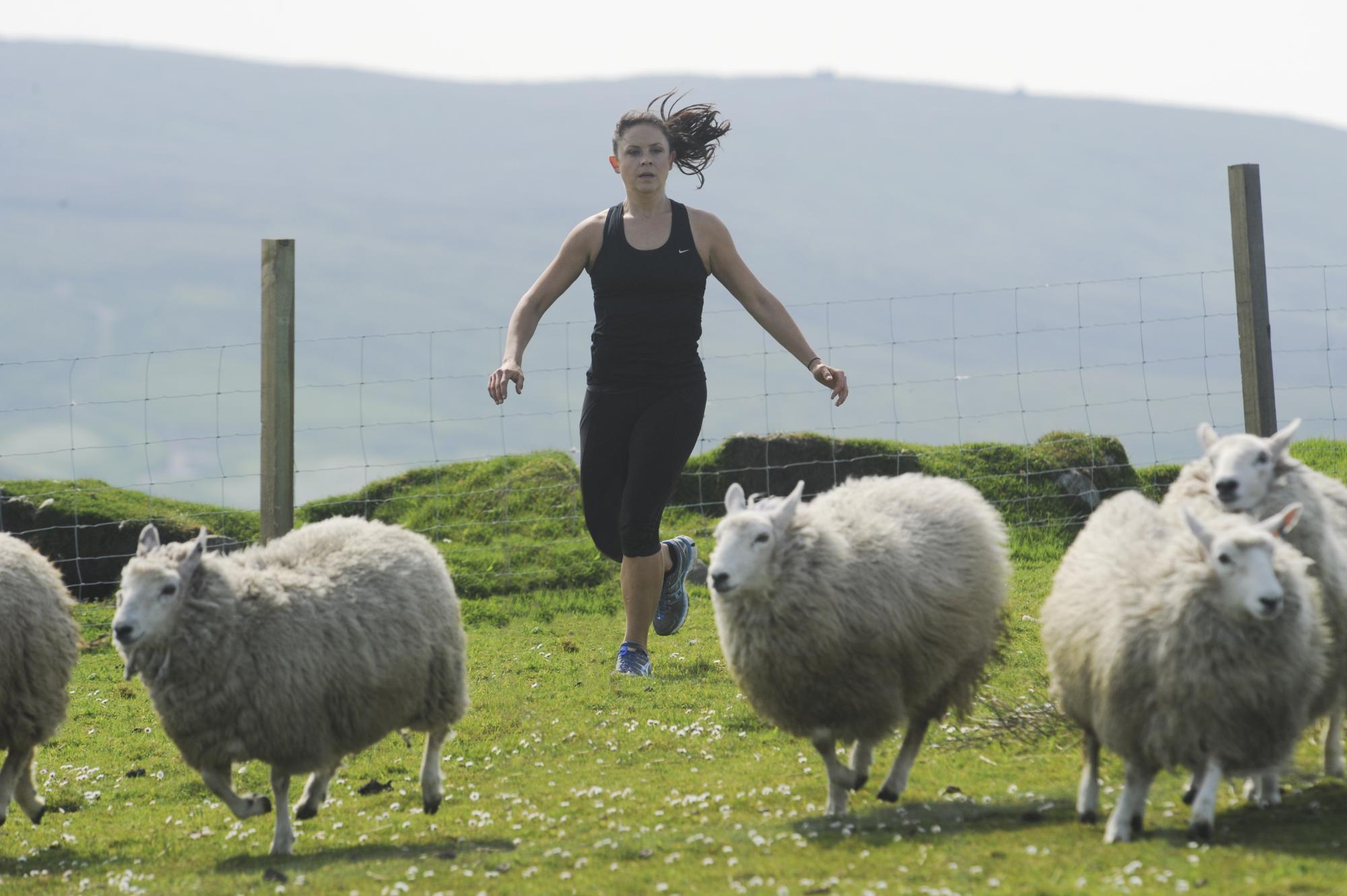 Running after sheep
