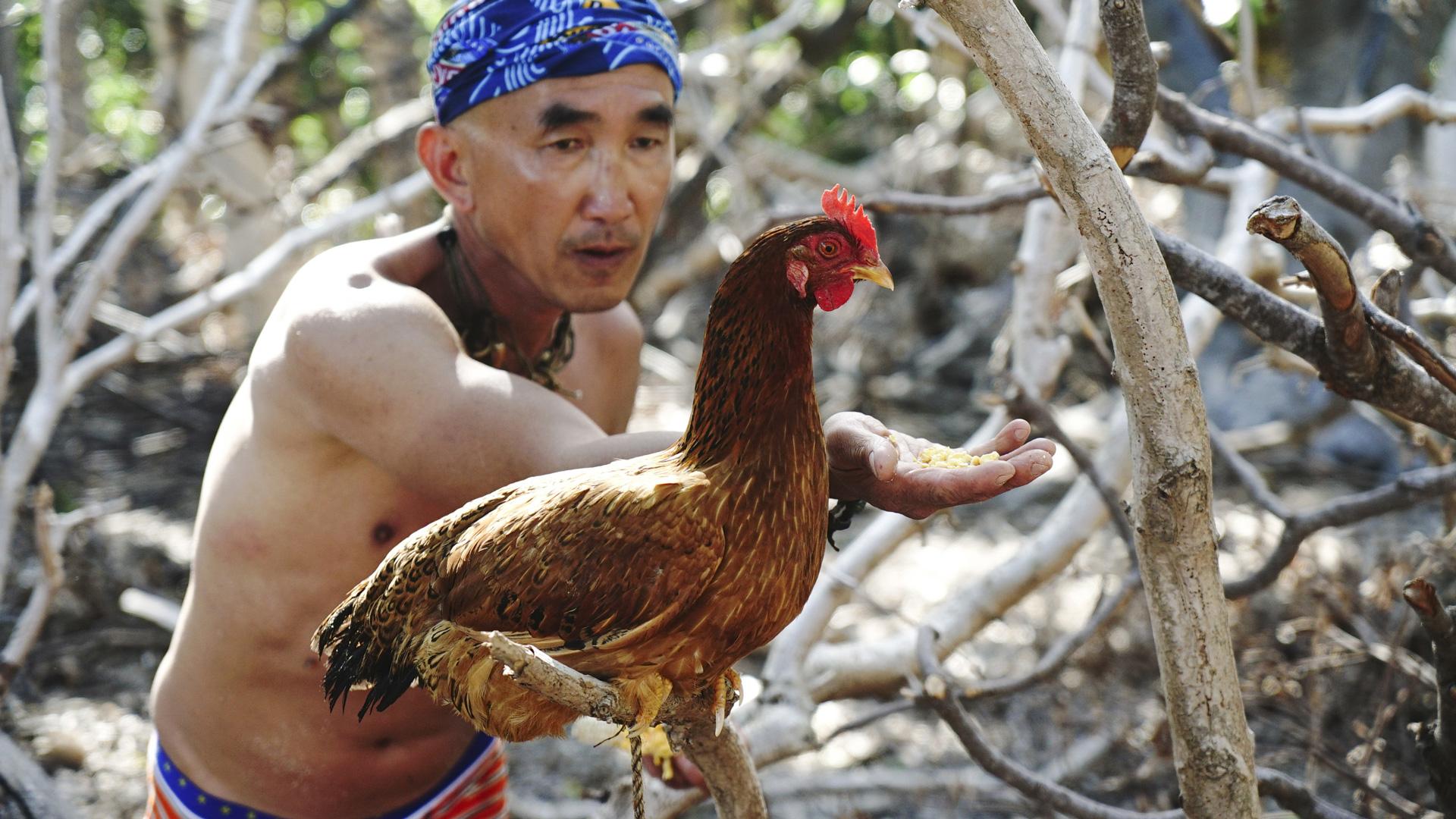 Survivor: Koah Rong finalist Tai Trang befriends a new chicken as he settles in.