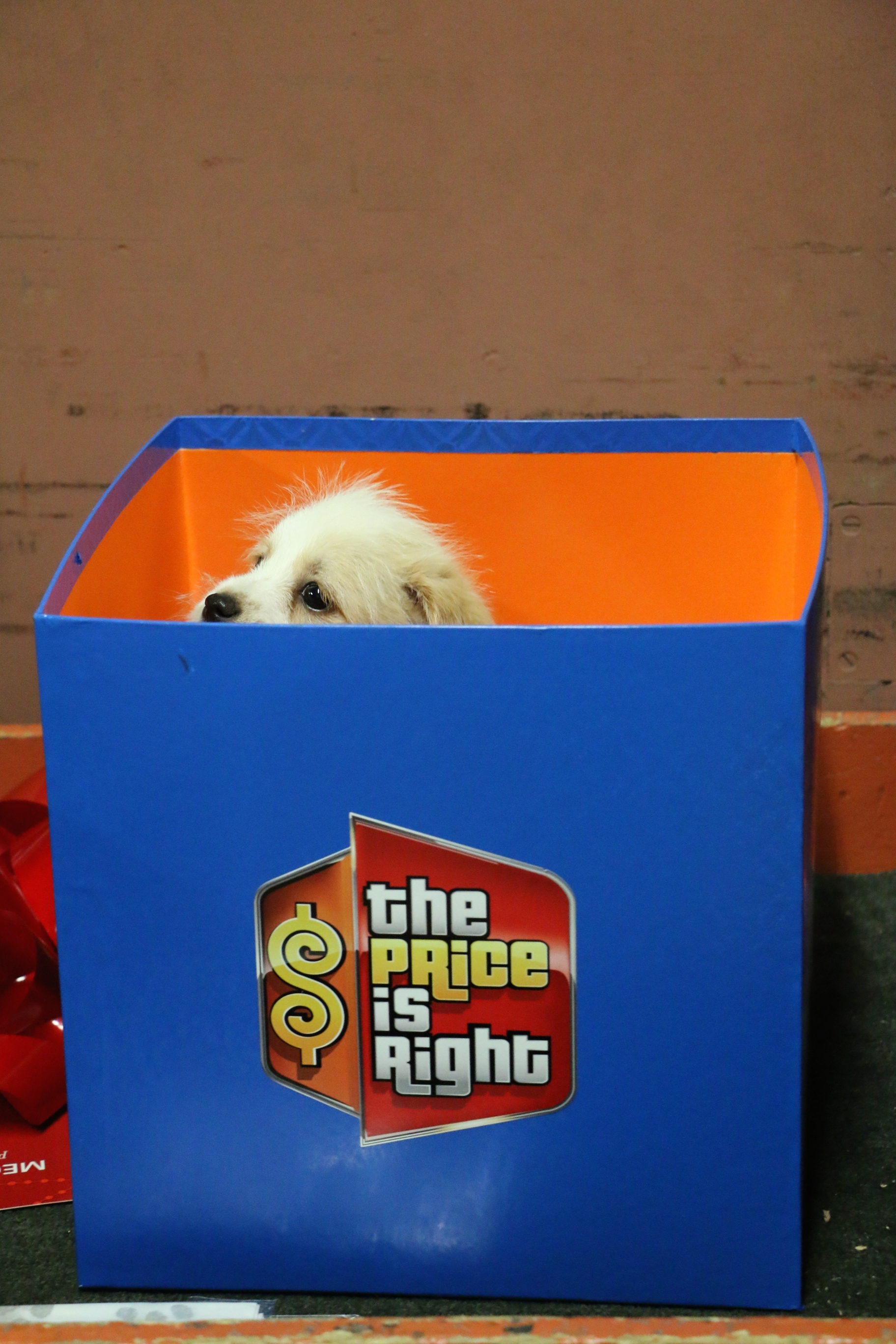 Who is in the box?!