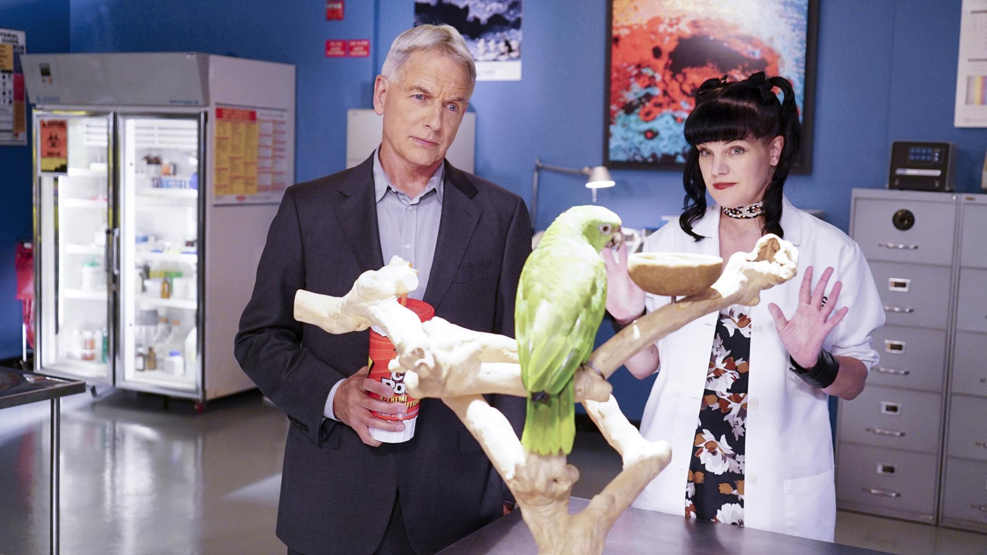 Gibbs meets Abby's new lab partner, Juan.