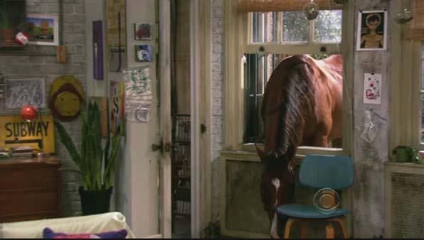 Chestnut, the Horse
