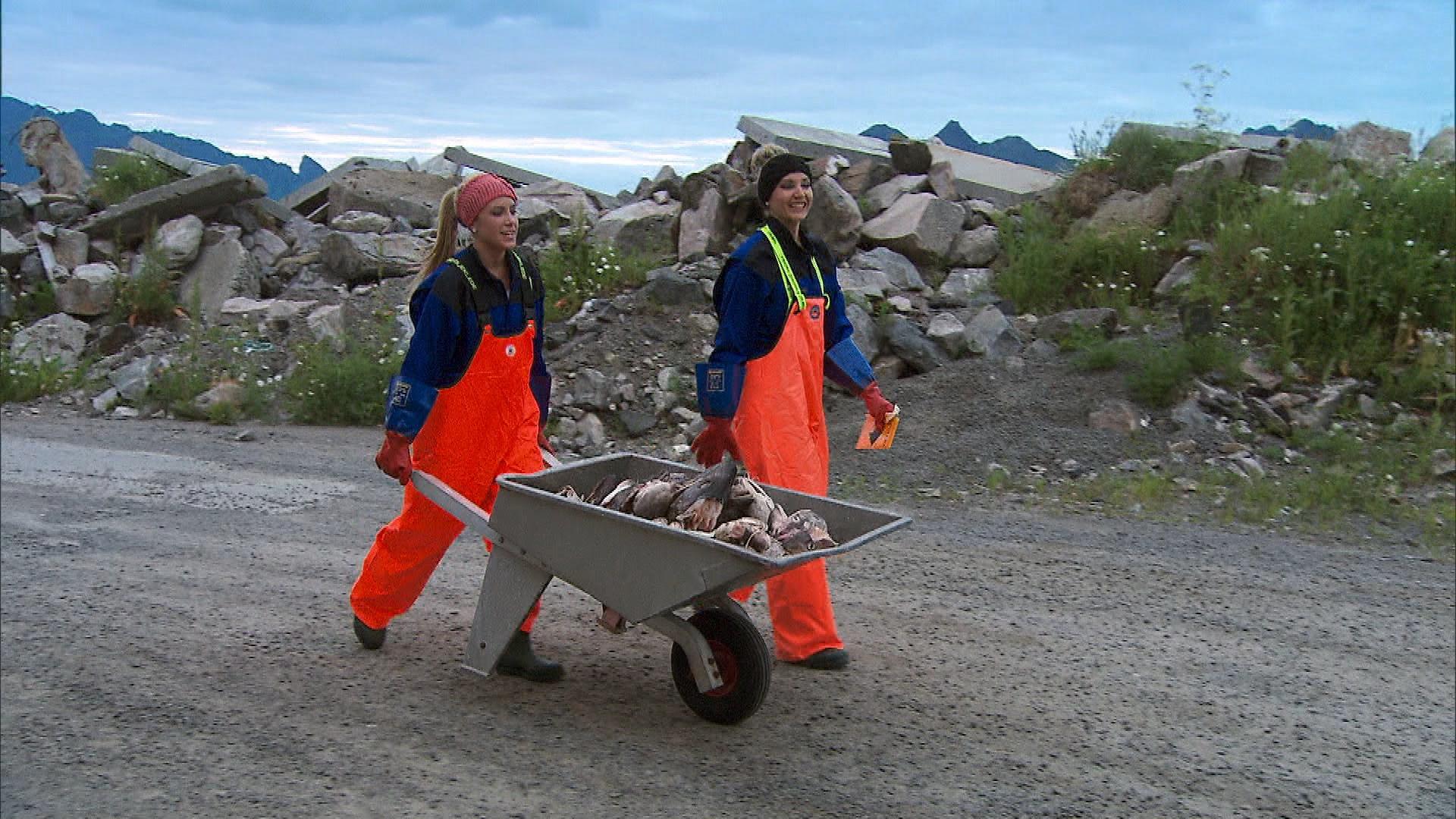 Transporting fish heads