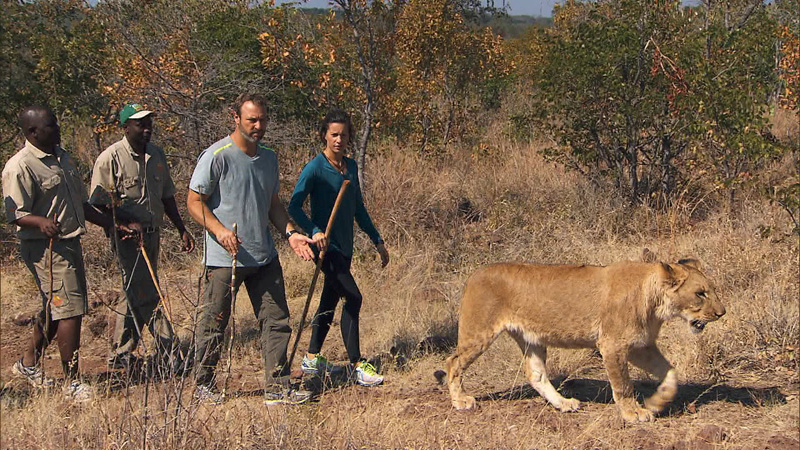 #ThePaparazzi take a stroll beside jungle royalty.