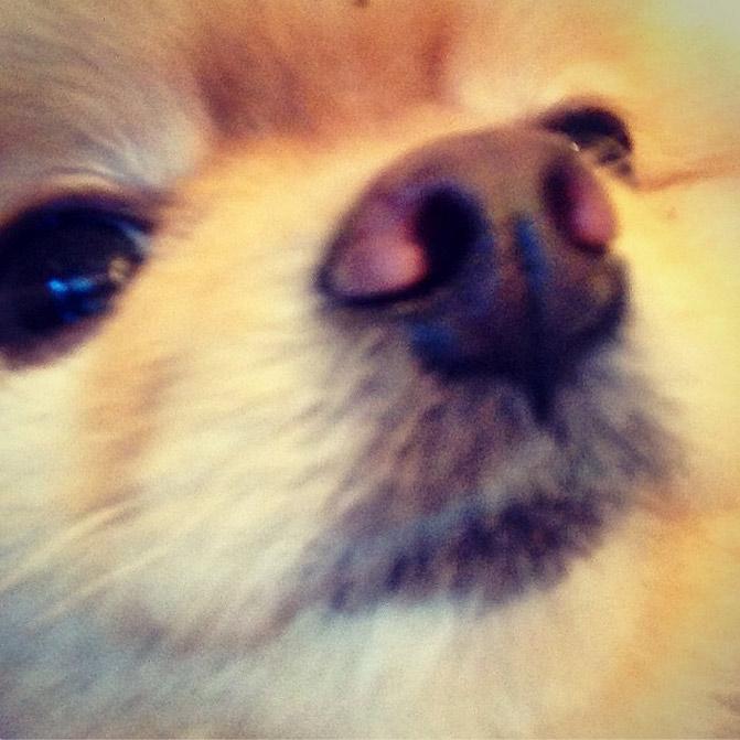 4. Bella takes selfies!