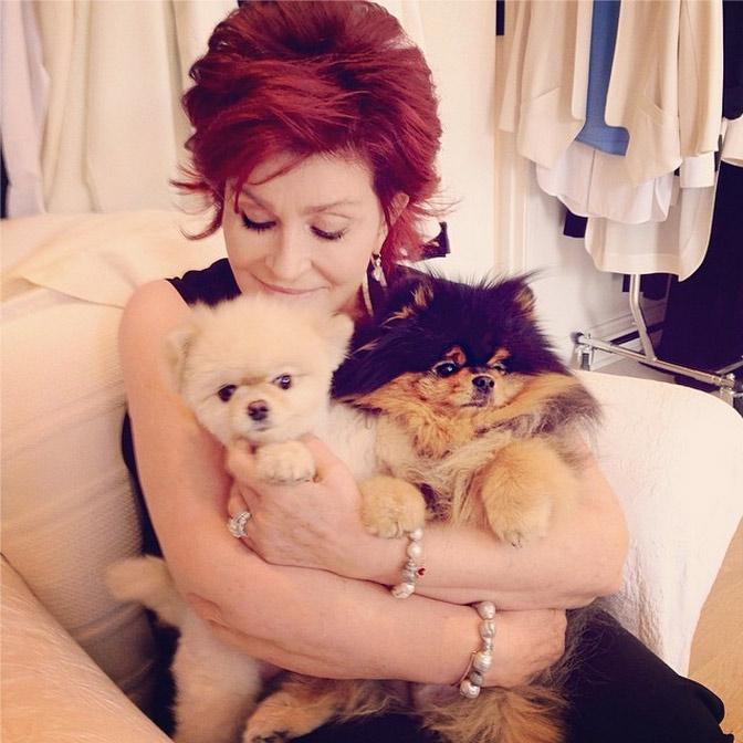 12. Bella and Rocky are super cuddly.